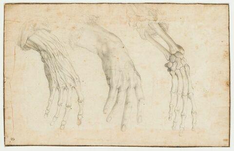 Trois études anatomiques d'une main