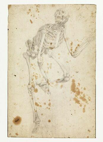 Etude d'un squelette debout, la jambe gauche levée