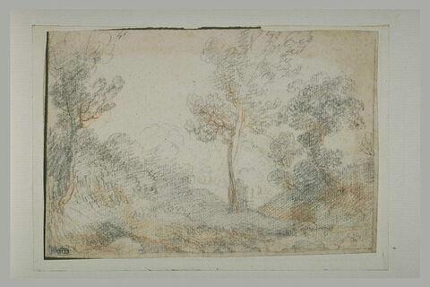 Paysage de sous-bois avec trois arbres