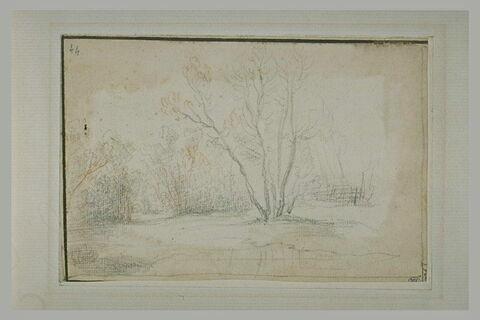 Paysage avec un bouquet d'arbres, au centre, et marecage