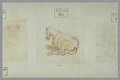 Un cheval couché, vu de dos, tourné vers la gauche