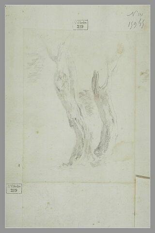 Etude de troncs d'arbres
