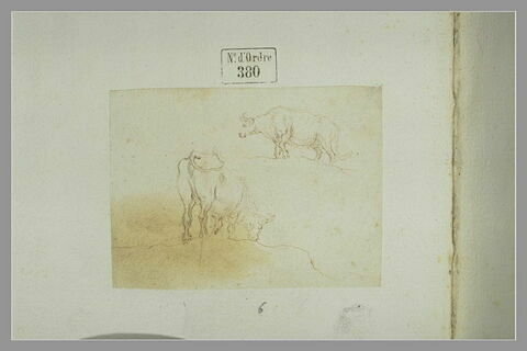 Deux études de vaches