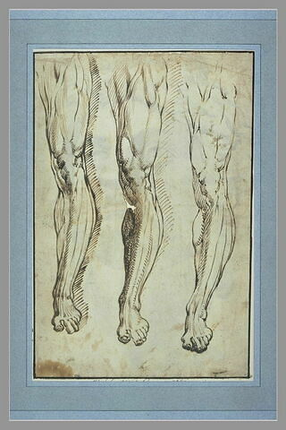 Trois études de jambes gauches
