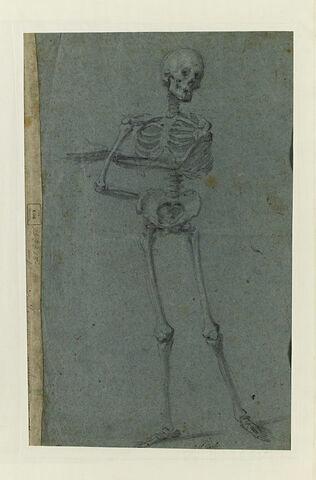Squelette debout, de face