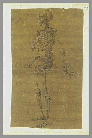 Squelette debout, tourné vers la gauche