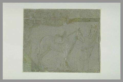 Etude de deux chevaux tournés vers la droite