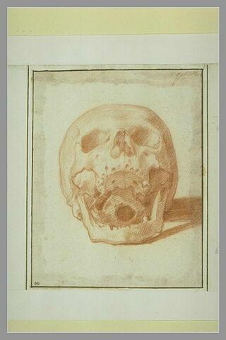 Crâne, de face, les mâchoires ouvertes