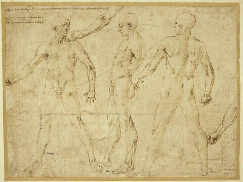 Trois nus masculins, de face, de dos, de profil ; deux études de bras