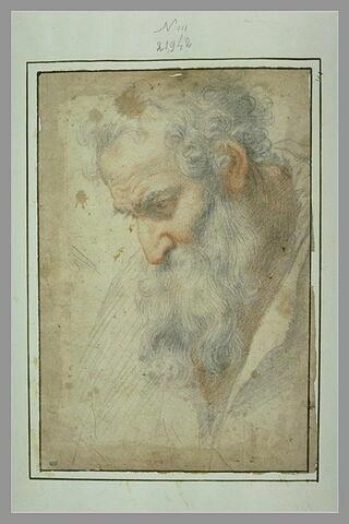 Tête d'homme barbu, de profil vers la gauche, regardant vers le bas