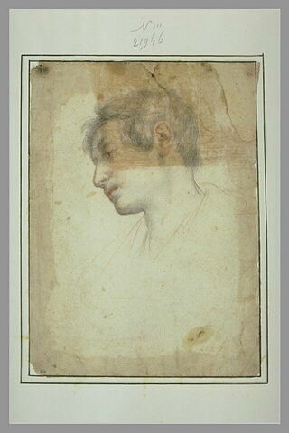 Tête de jeune homme, de profil, tourné vers la gauche, le regard baissé