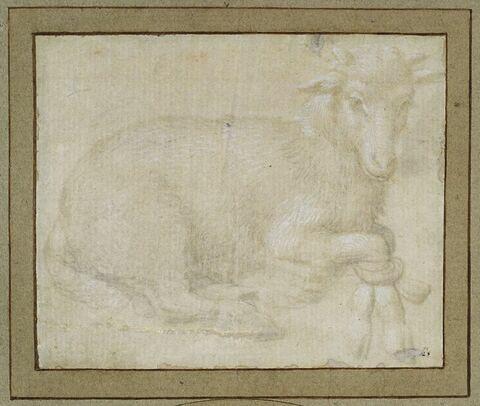 Etude d'un agneau dont les pattes avant sont liées
