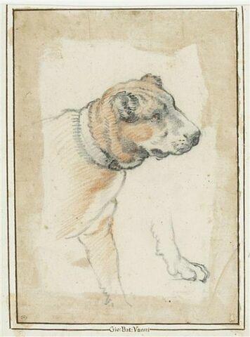 Tête et partie antérieure d'un chien ; reprise d'une patte