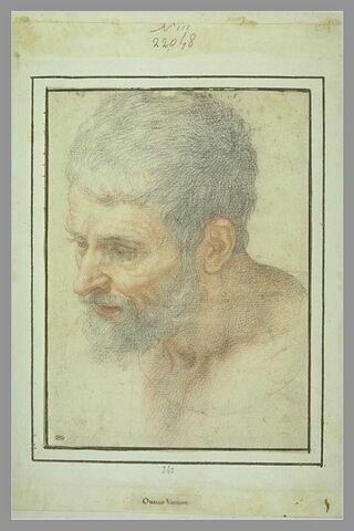 Tête d'homme barbu, tournée vers la gauche, regardant vers le bas
