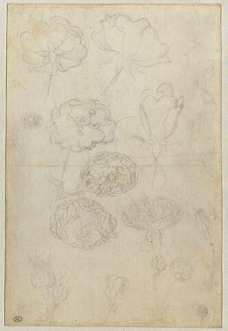 Dix-huit études de roses en fleur ou en bouton