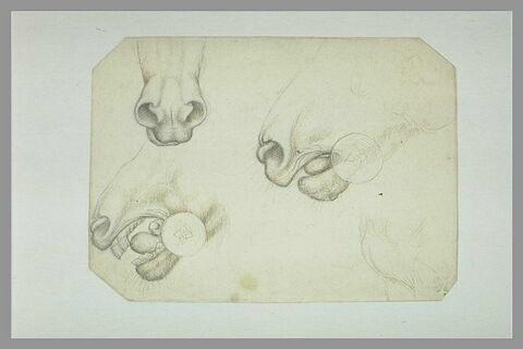 Trois études des naseaux et de la bouche d'un cheval et esquisse du poitrail