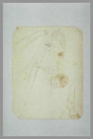 Tête et encolure d'un cheval harnaché et partie de sa jambe droite