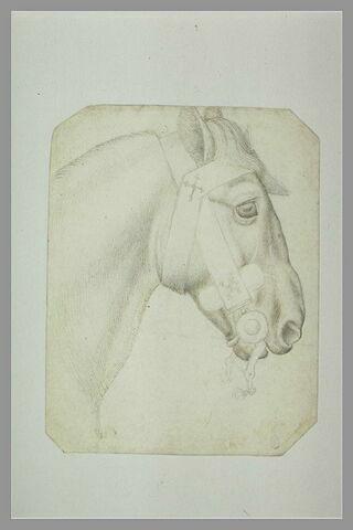 Tête et encolure d'un cheval harnaché, de profil vers la droite