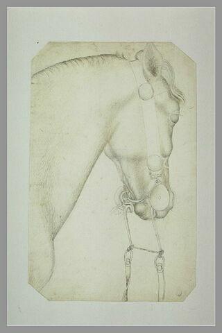 Tête et encolure d'un cheval harnaché, la bride pendante