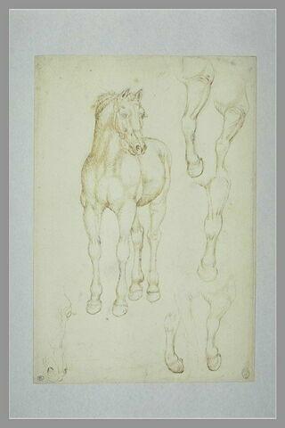 Cheval vu de trois qaurts vers la gauche, reprises de la tête et de la jambe