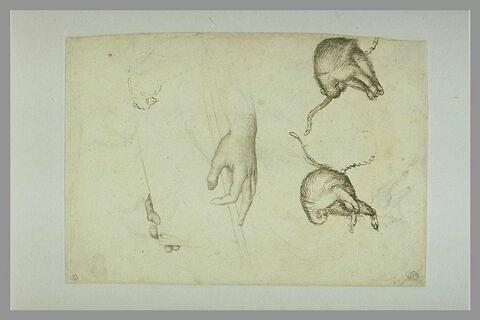 Deux mains tenant un livre ; deux singes enchaînés, et esquisses de singes