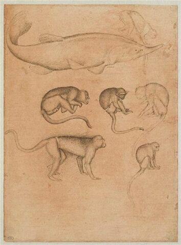 Esturgeon de profil vers la droite ; six singes