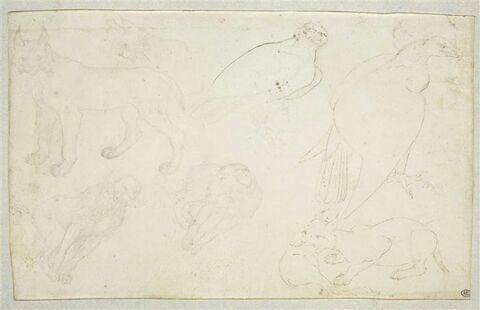 Deux lynx ; une tête de lynx ; un aigle ; un vautour ; deux chiens