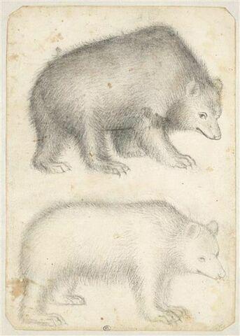 Deux ours, debout, de profil vers la droite