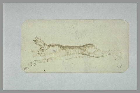Lièvre mort, étendu sur le flanc droit dans la position de la course ; rose