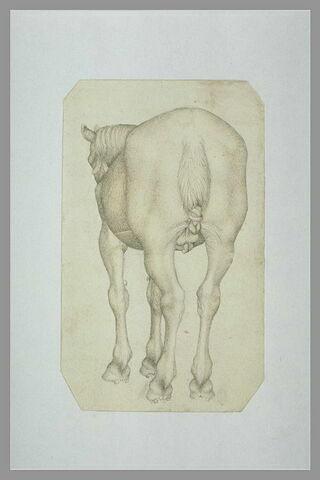 Cheval harnaché, vu par l'arrière, de trois quarts vers la gauche