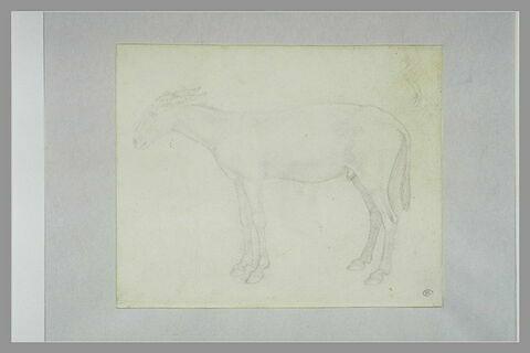 âne debout ; esquisse d'un âne avec un ânier, reprises