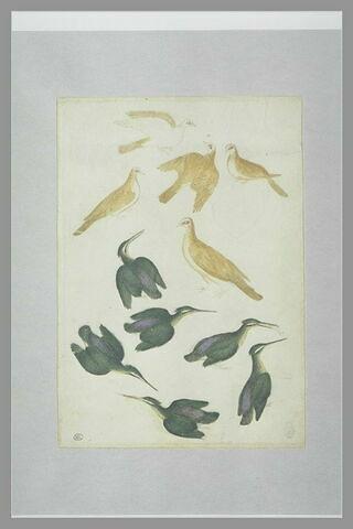 Cinq tourterelles et six martins-pêcheurs