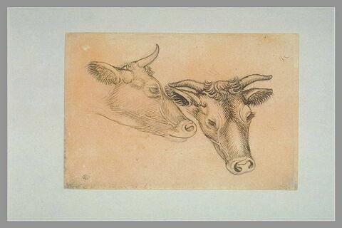 Deux études d'une tête d'un bovin