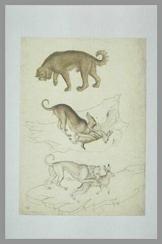 Trois chiens de chasse : l'un marchant, les deux autres chassant