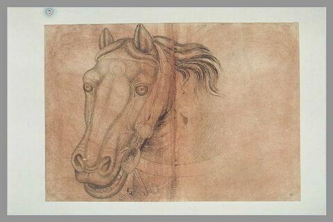 Tête d'un cheval harnaché, de trois quarts vers la gauche