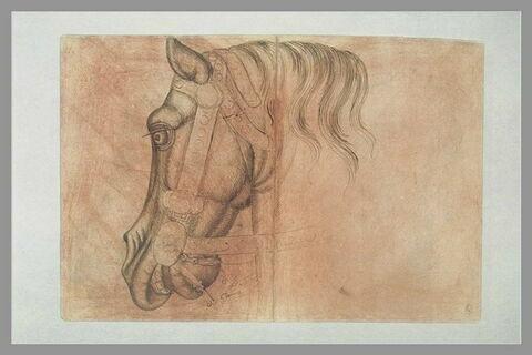 Tête et encolure d'un cheval harnaché, de profil vers la gauche