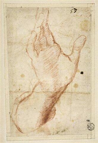 Etude d'une main droite ouverte