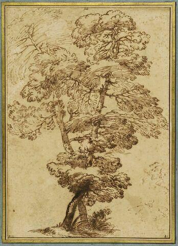 Etude de deux arbres se croisant