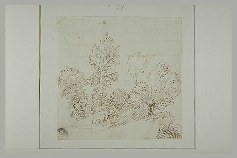 Groupe d'arbres