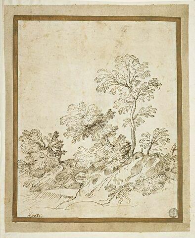 Groupe d'arbres sur un talus