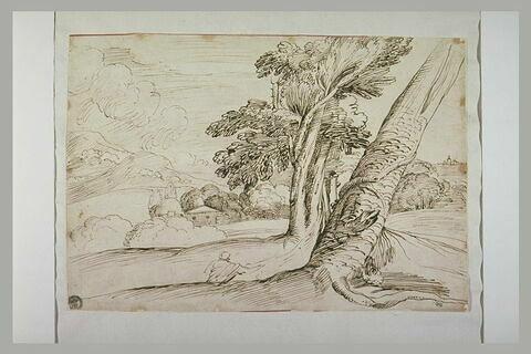 Homme assis près d'un arbre penché, dans un vaste paysage vallonné