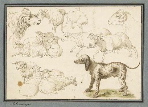 Etudes de moutons et béliers, seuls ou groupés, et d'un chien