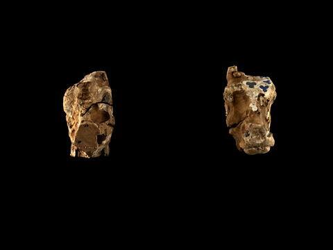 vue groupée ; face, recto, avers, avant © 2014 Musée du Louvre / Georges Poncet