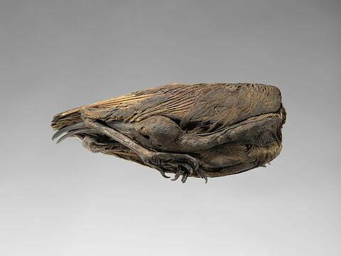 momie d'ibis