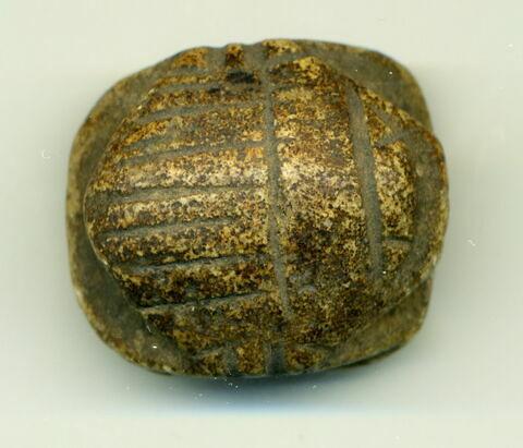 scarabée ; scarabée funéraire