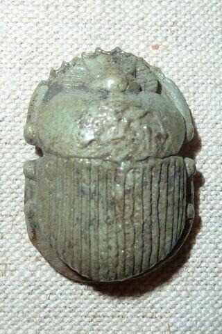 scarabée détaillé