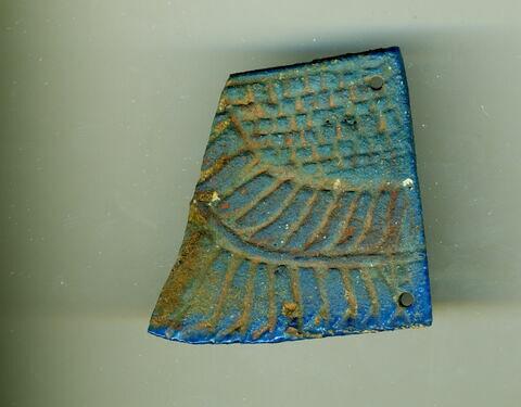aile gauche de scarabée funéraire