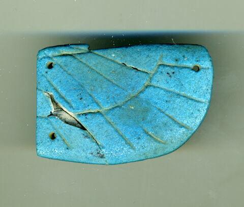 aile droite de scarabée funéraire