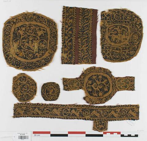 orbiculus ; bande de poignet ; bande décorative d'habillement