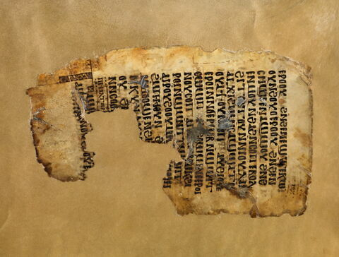codex ; Fragment de feuillet : Psautier